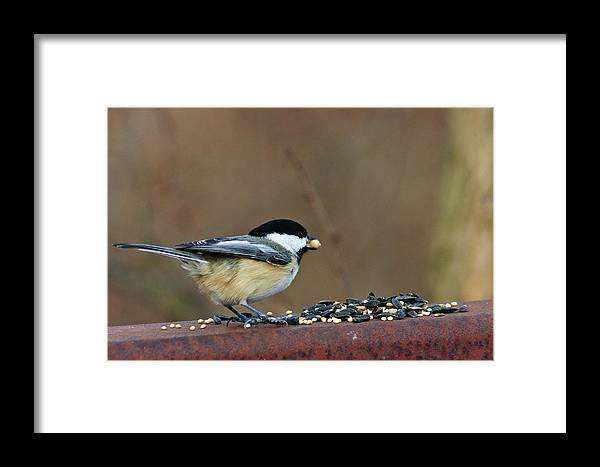 Chickadee Framed Print featuring the digital art I'll Take This One by Nikki Nisly