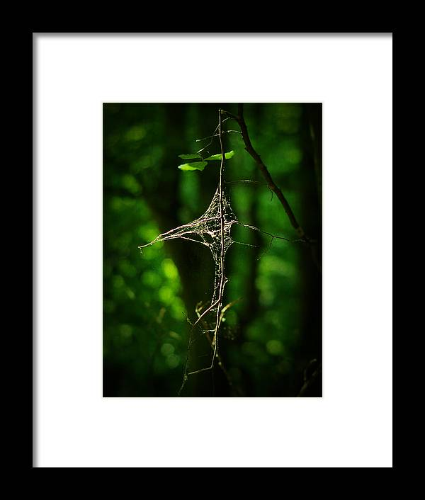 Forest Framed Print featuring the photograph Illumination by Rebecca Sherman