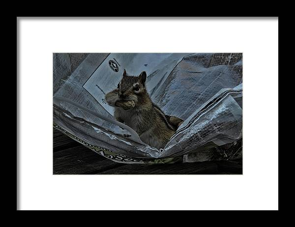 Chipmunk Framed Print featuring the photograph I'm Hungry by Randy J Heath