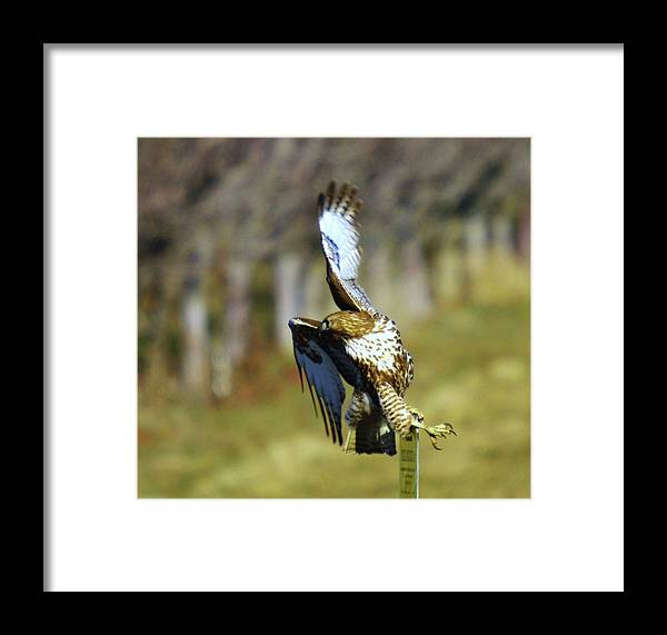 Birds Framed Print featuring the photograph I'm Out Of Here by Jeff Swan