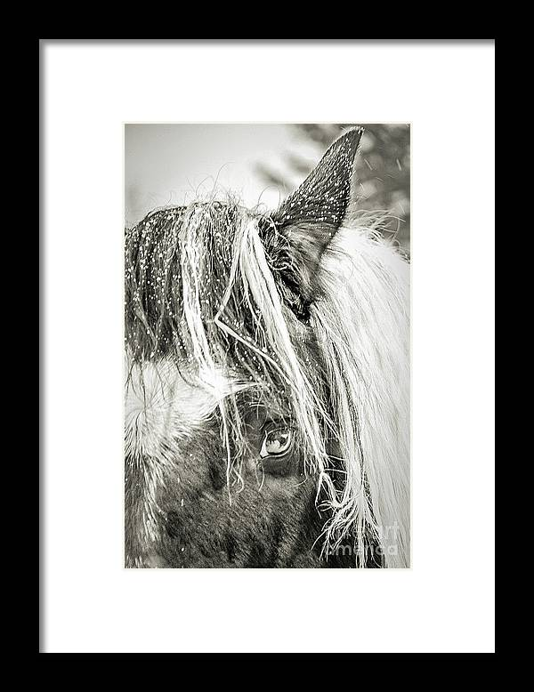 Horse Framed Print featuring the photograph I'm So Cold by Randy J Heath