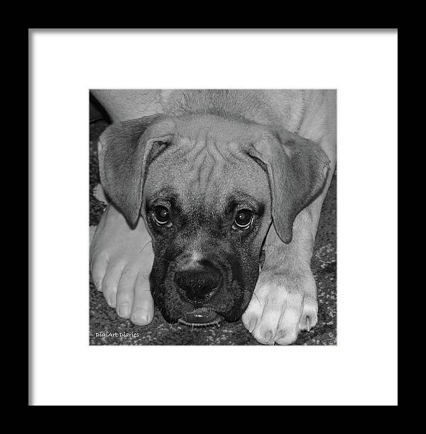 Boxer Framed Print featuring the digital art Impawsible by DigiArt Diaries by Vicky B Fuller