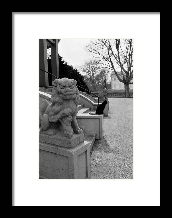 Cat Framed Print featuring the photograph Imposter by Jeff Porter
