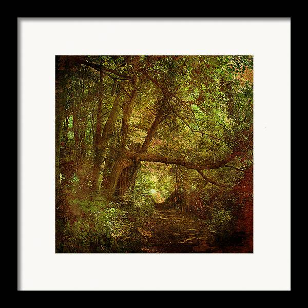 Forest Framed Print featuring the photograph In A Forest by Inesa Kayuta
