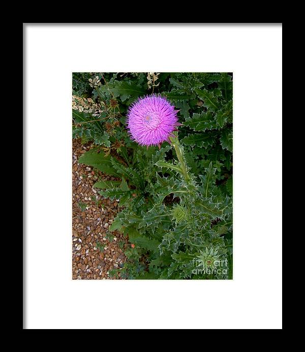 Photography Framed Print featuring the digital art In Demure Profile by Nancy Kane Chapman