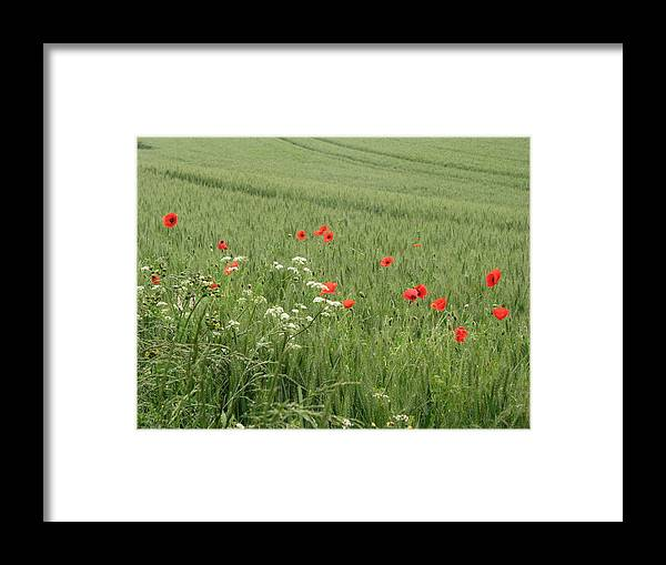 Lest-we Forget Framed Print featuring the photograph in Flanders Fields the poppies blow by Mary Ellen Mueller Legault