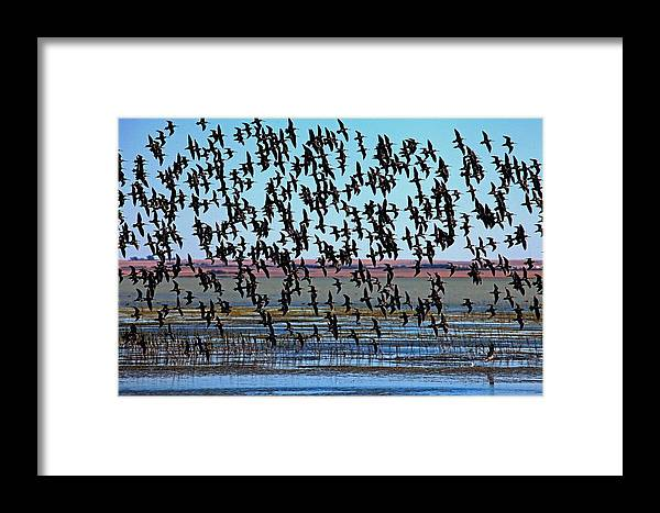 Bird Framed Print featuring the photograph In Formation by Darcy Dietrich