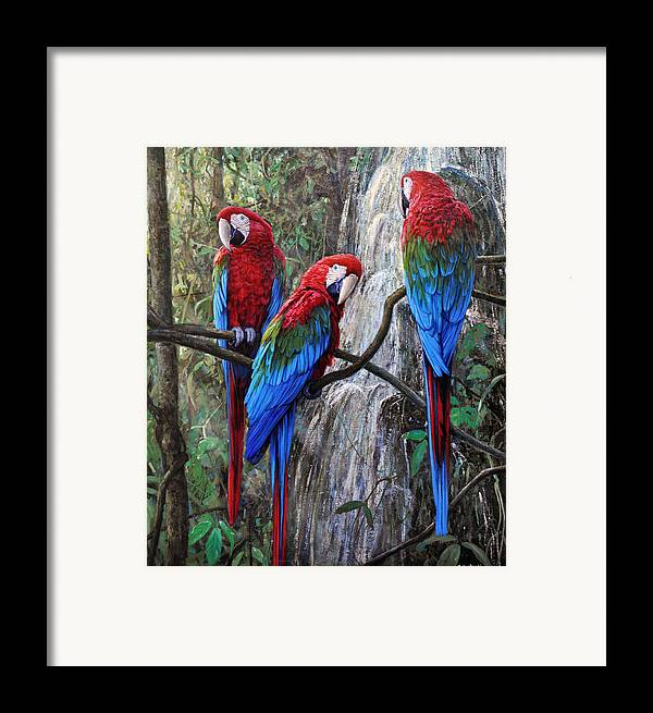 Macaws Framed Print featuring the painting In Front Of The Cascade by Gabriel Hermida
