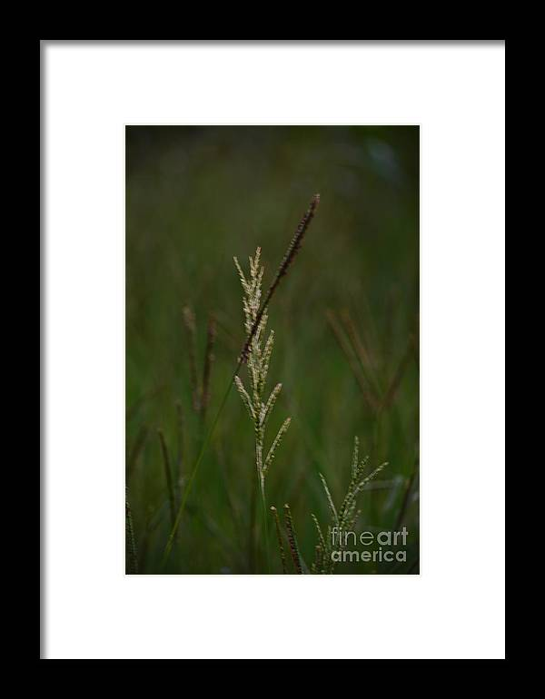 In Green Meadows Framed Print featuring the photograph In Green Meadows by Maria Urso