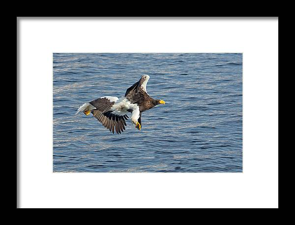 Birds Framed Print featuring the photograph In Line Flying by Leigh Lofgren