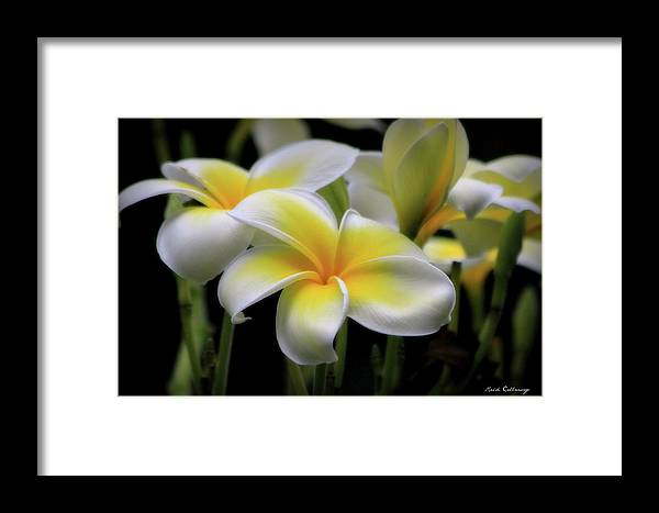 Reid Callaway In Love With Butterflies Framed Print featuring the photograph In Love With Butterflies Plumeria Flower Cecil B Day Butterfly Center Art by Reid Callaway