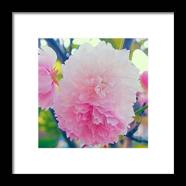Pink Framed Print featuring the photograph In Love With This Delicate #pink #tree by Shari Warren