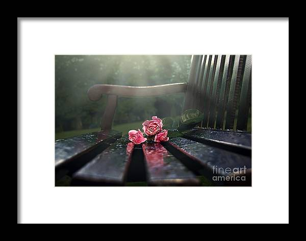 Bench Framed Print featuring the photograph In Memory by Svetlana Sewell