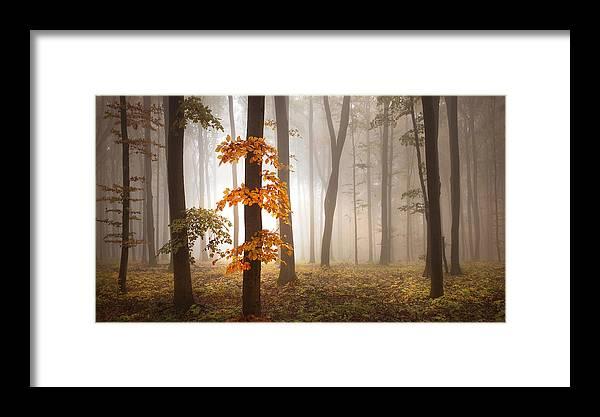 Landscape Framed Print featuring the photograph In November Light by Franz Schumacher