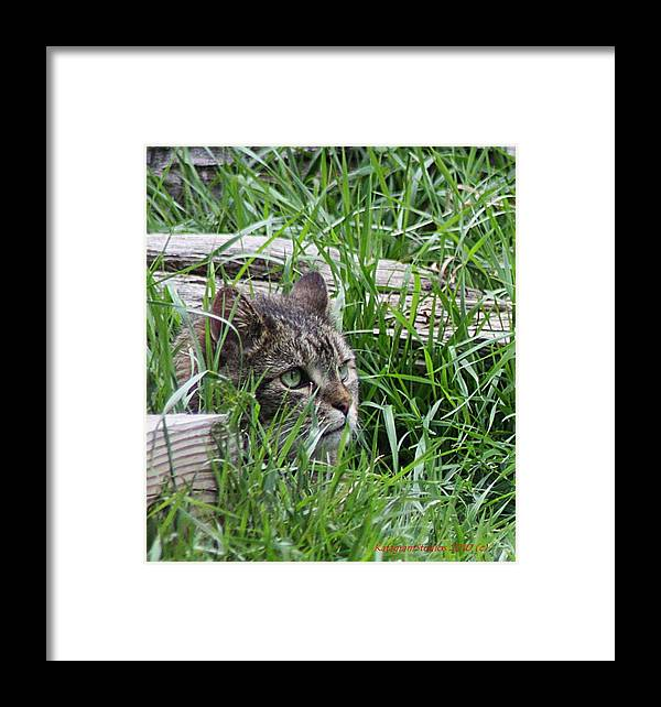Kitty Framed Print featuring the photograph In Plain Sight by KatagramStudios Photography
