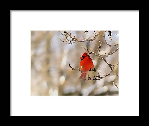 Cardinal Framed Print featuring the photograph In Red by Gaby Swanson