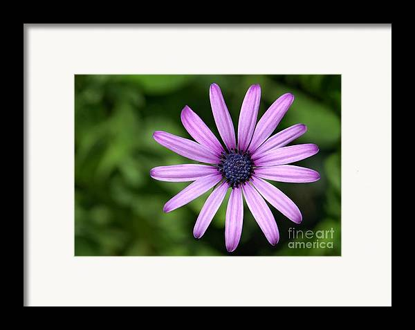 Flower Framed Print featuring the photograph In The Garden by Dan Holm
