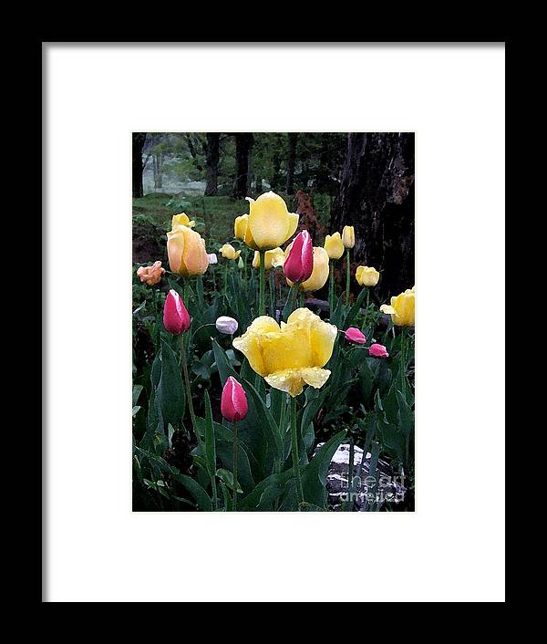 Tulips Framed Print featuring the photograph In The Garden by Judy Waller