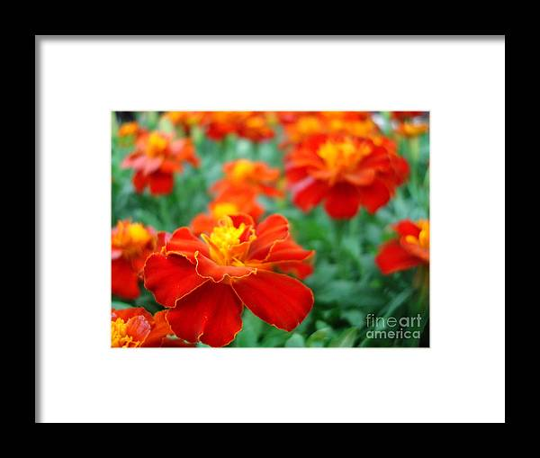 Floral Framed Print featuring the photograph In The Garden by Kathy Bucari