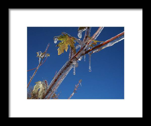 Sky Blue Ice Leaves Framed Print featuring the photograph In The Ice by Michael Parsons