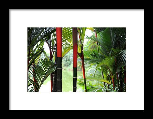 Red Framed Print featuring the photograph In The Jungle by Jessica Rose