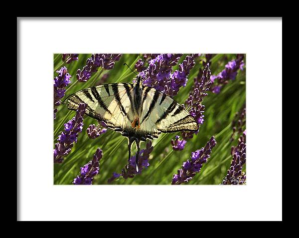 France Framed Print featuring the photograph In The Lavender by Joe Bonita