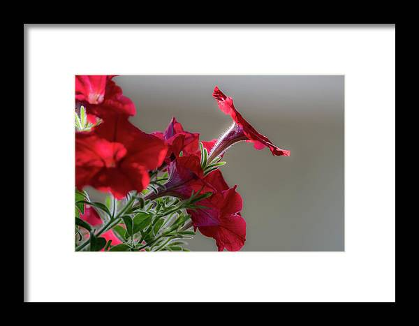 In The Morning Sun Framed Print featuring the photograph In The Morning Sun by Bob Marquis