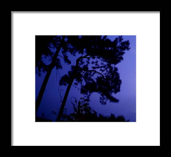 Trees Framed Print featuring the photograph In The Pines by Leslie Revels