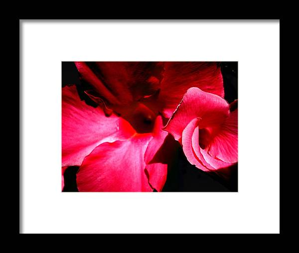 Flowers Framed Print featuring the photograph In The Pink 1 by Nelson F Martinez