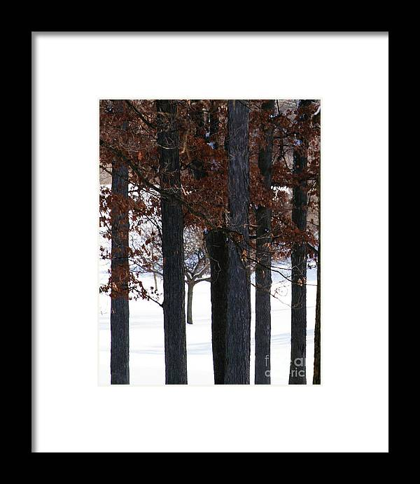 Woods Framed Print featuring the photograph In The Presence Of Elders by Linda Shafer