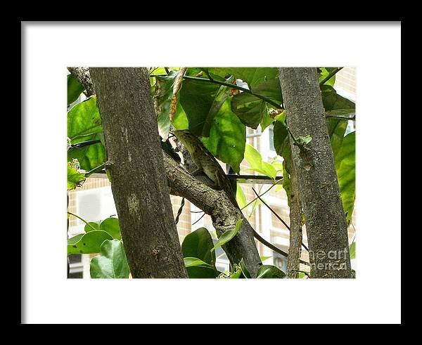 Lizard Framed Print featuring the photograph In The Shade by Kathy Daxon
