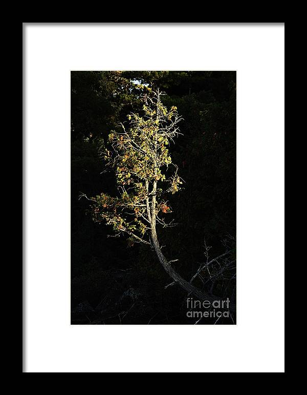 Photography Framed Print featuring the photograph In The Spot Light by Larry Ricker