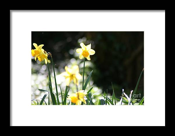 Flower Framed Print featuring the photograph In The Springtime Sunshine by Hannah Goddard-Stuart