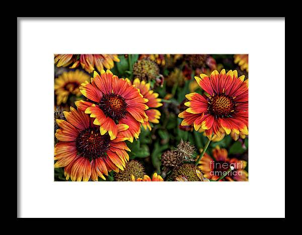 Flowers Framed Print featuring the photograph In The Summer Garden by Kirt Tisdale