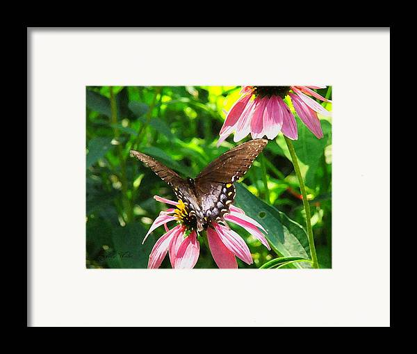 Butterfly Framed Print featuring the photograph In The Upper Garden - Two by Judy Waller