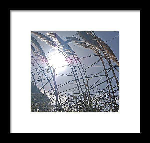Grass Framed Print featuring the photograph In The Wind by Jean Booth