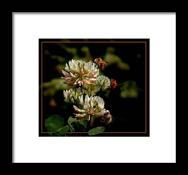 Bees Framed Print featuring the photograph In The Work by Richard Gordon