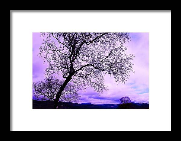 Tree Framed Print featuring the photograph In Touch by HweeYen Ong