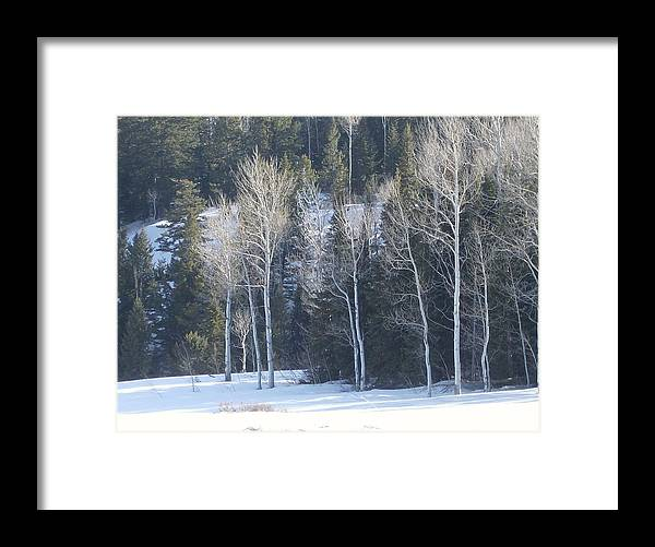 Trees Framed Print featuring the photograph In Winter by Susan Pedrini