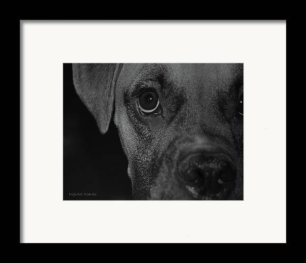 Boxer Framed Print featuring the digital art In Your Face by DigiArt Diaries by Vicky B Fuller