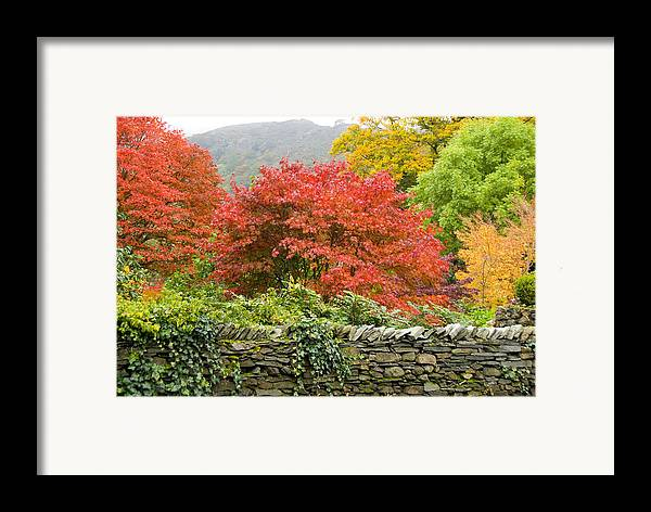 Leaves Framed Print featuring the photograph Incredible Fall Colors by Charles Ridgway