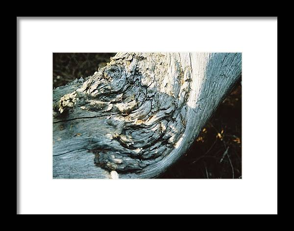 Dry Log Framed Print featuring the photograph Indefinite Perpetuation by Jennifer Trone