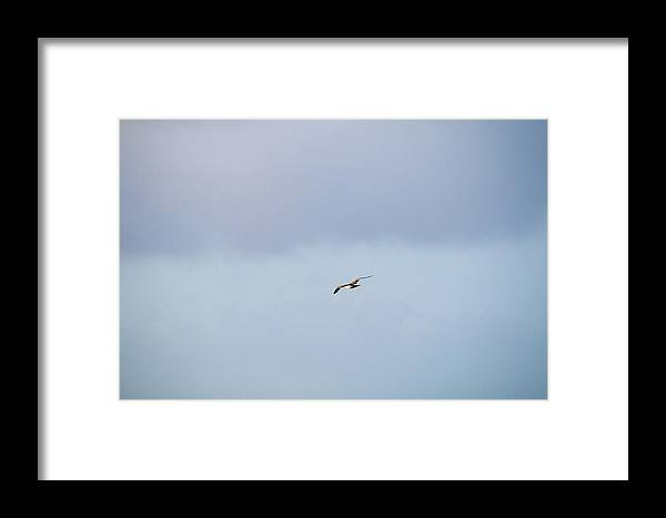 Bird Framed Print featuring the photograph Independence by Robert Popa