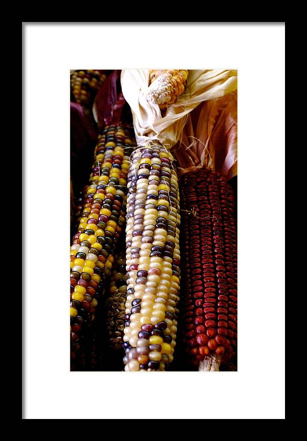 Farmers Market Framed Print featuring the photograph Indian Corn by Sonja Anderson