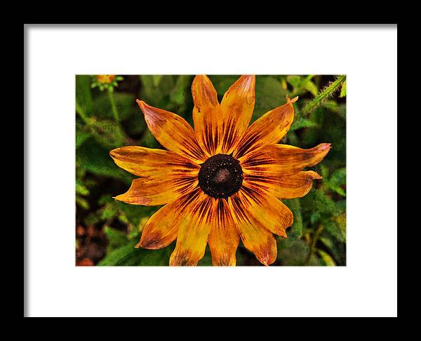 Flower Framed Print featuring the photograph Indian Summer by JAMART Photography