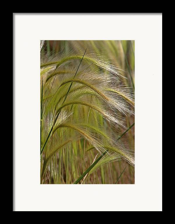 Grass Framed Print featuring the photograph Indiangrass Swaying Softly With The Wind by Christine Till