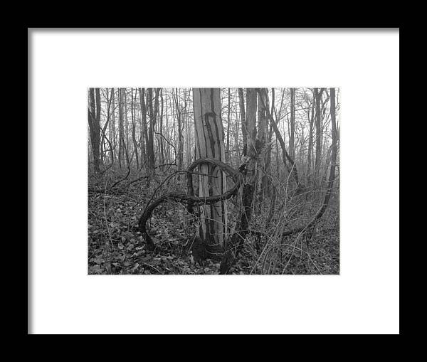 Infinity Framed Print featuring the photograph Infinity Vine by Shelley Smith