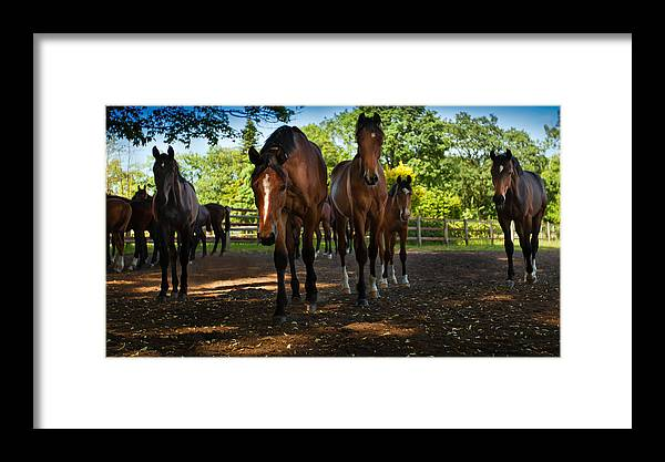 Northern Germany Framed Print featuring the photograph Inquisitive Horses by David Melville