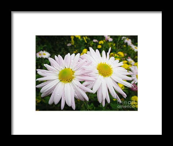 Photography Framed Print featuring the photograph Inseparables Daisies by Julia Gogol