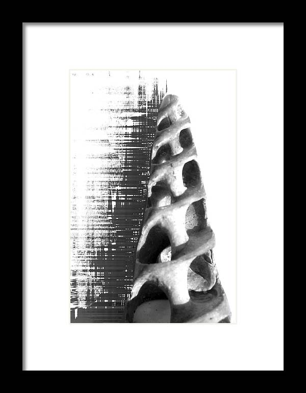 Shells Framed Print featuring the photograph inspiration from Gaudi by Evguenia Men